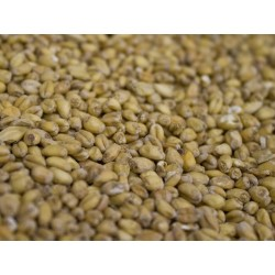 Wheat Malt  (1lb)