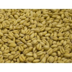 Torrified Wheat  (1lb)